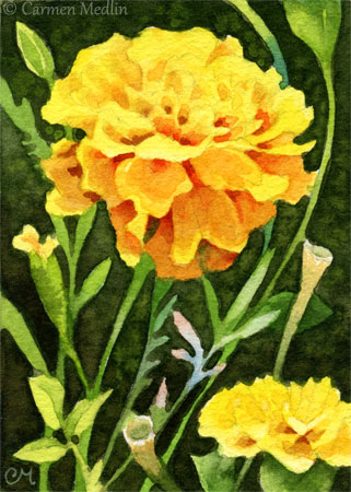 Happy Marigolds ACEO realistic flower painting