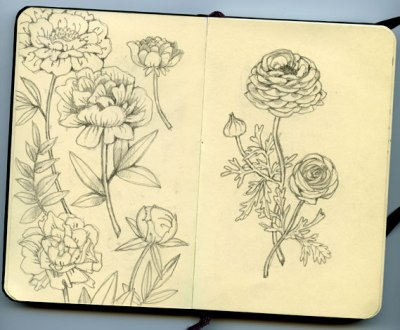Pretty peonies and ranunculus sketches in a Moleskine